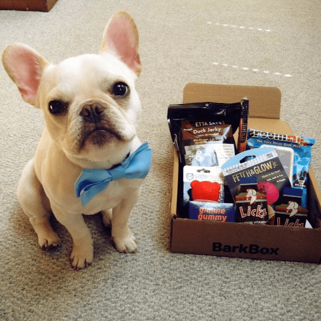 tan french bulldog wearing bowtie next to barkbox delivery