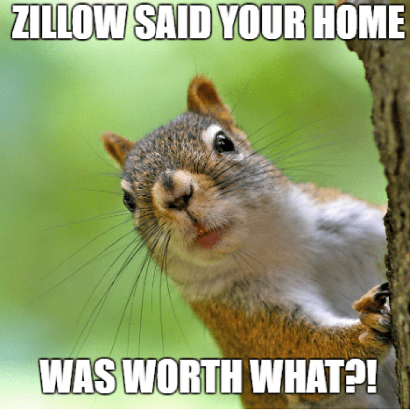 Squirrel surprised looking around tree real estate meme