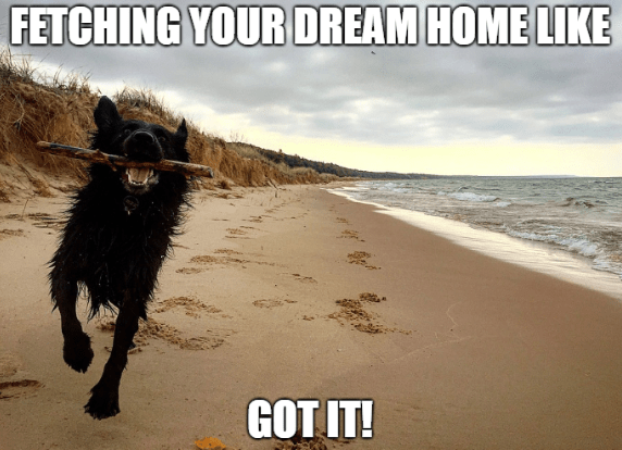 "dog running on beach with stick in mouth ""fetching dream home"" meme"