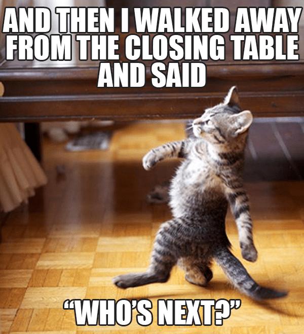 cat real estate meme