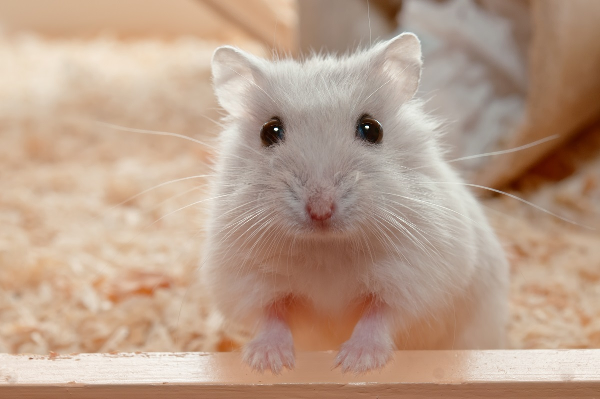 Are You Trapped in the Real Estate Hamster Wheel?